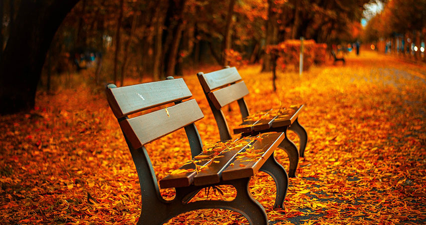 bench-560435_feat